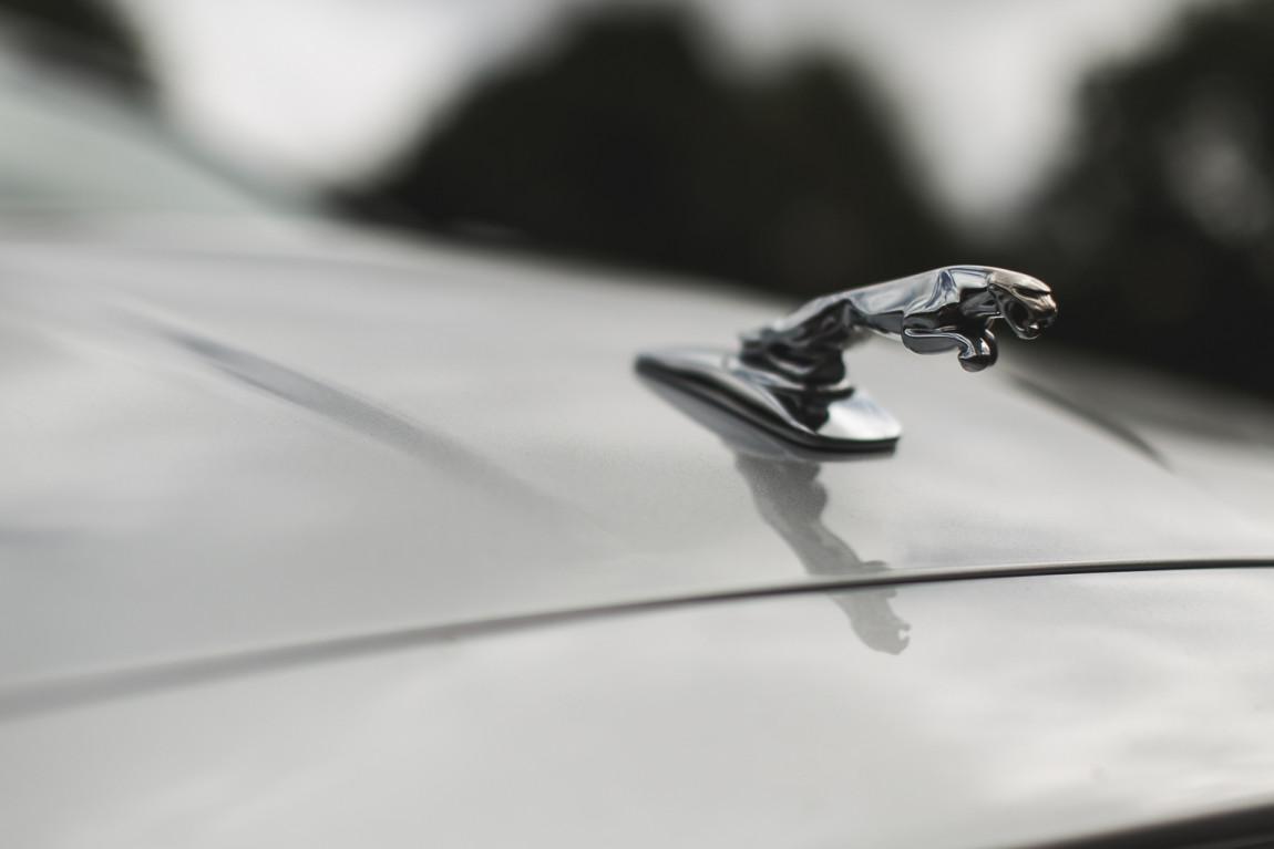 JaguarTheQueen-D.jpg